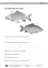 Awesome Fisch Arbeitsblatt Ensign - Kindergarten Arbeitsblatt ...