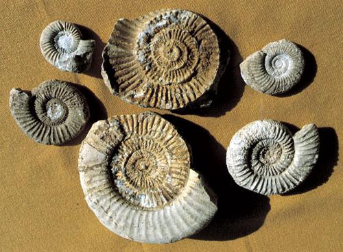 Fossiliendatierung