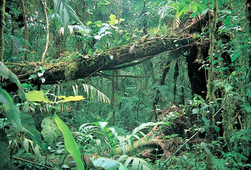 Orchideen im tropischen regenwald  Ernst Klett Verlag - Lehrwerk Online - TERRA-Online / Realschule ...